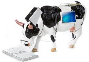 Wi-Fi Enabled Cows And Ubiquitous Computing